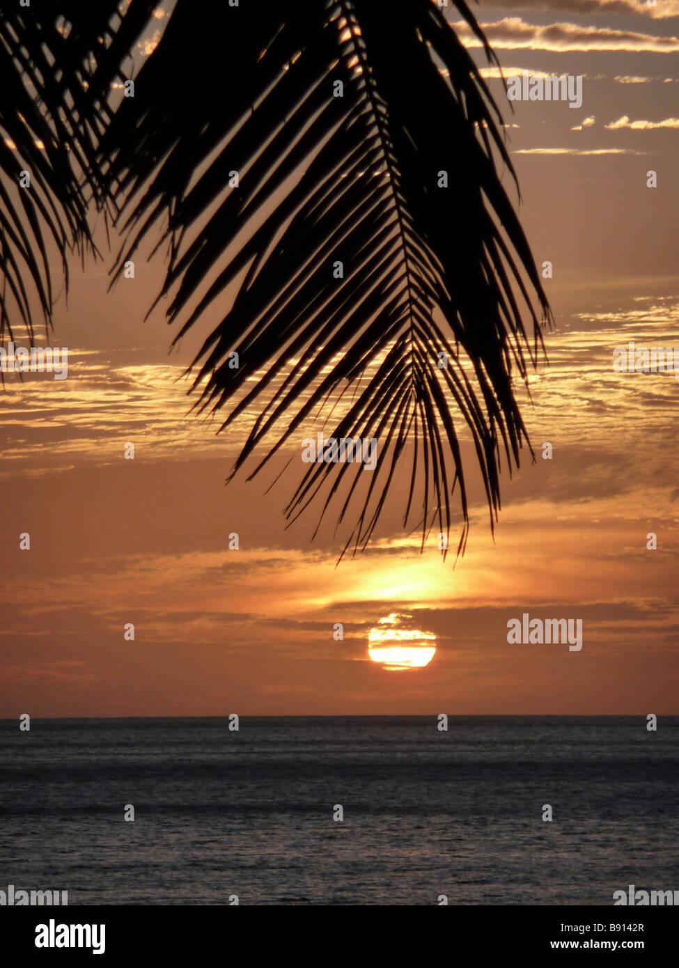 Palm Tree Sunset - Stock Image