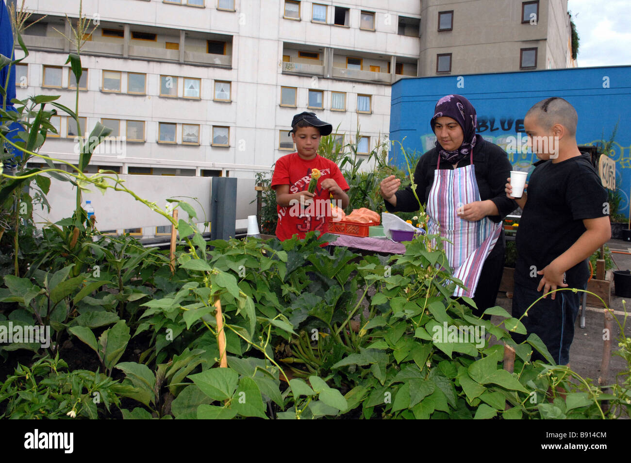 Turkish family picking vegetables, Berlin, Germany - Stock Image