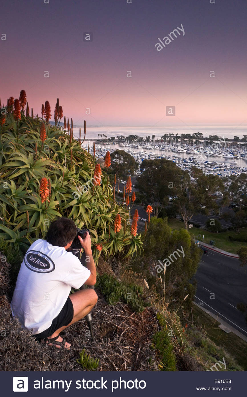 Travel Photographer Ron Niebrugge Taking Pictures of Flowers on Hillside Dana Point Harbor California - Stock Image