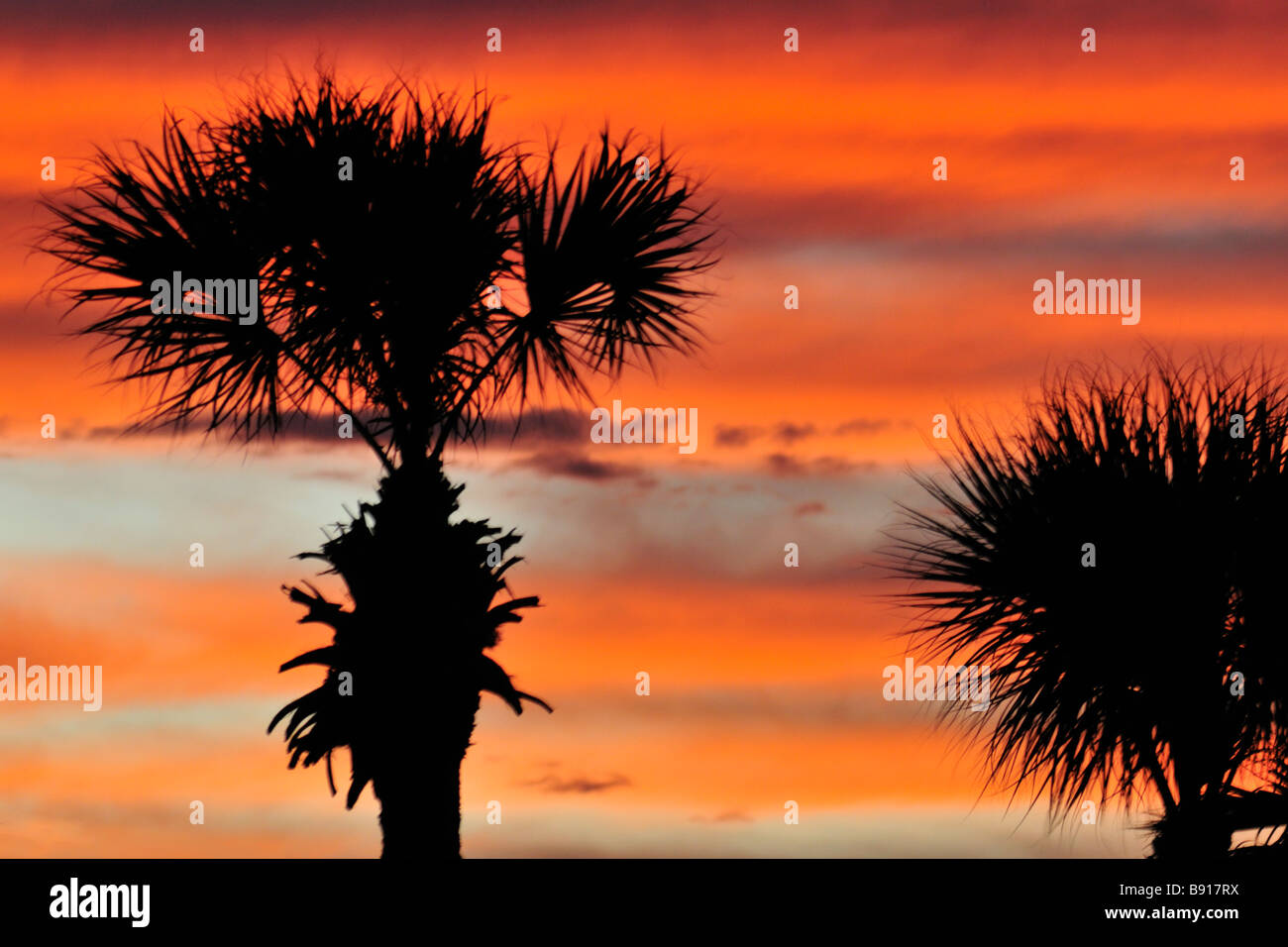 Sunset with multicolored striated afterglow sky and palms - Stock Image