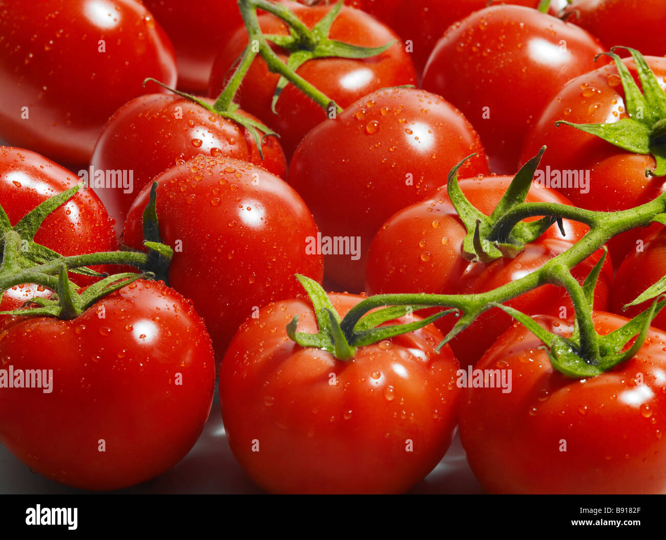 Fresh vine ripened tomatoes - Stock Image