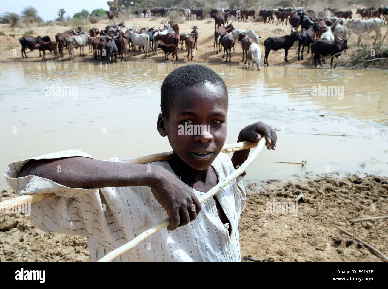 Nigeria: young herdsman with his animals at a watering place - Stock Image
