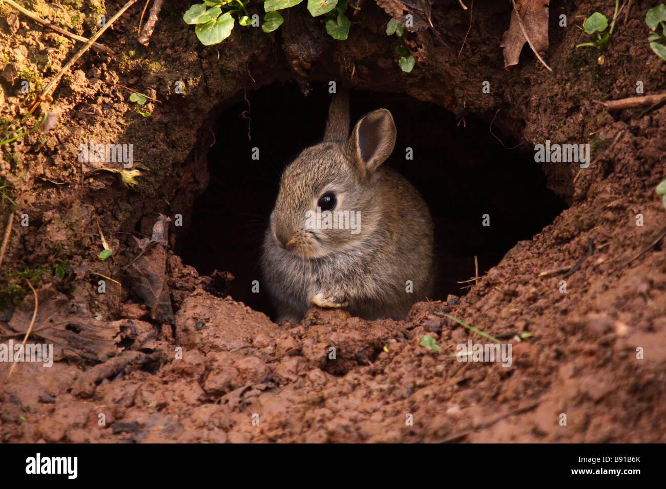 Картинки норы зайца