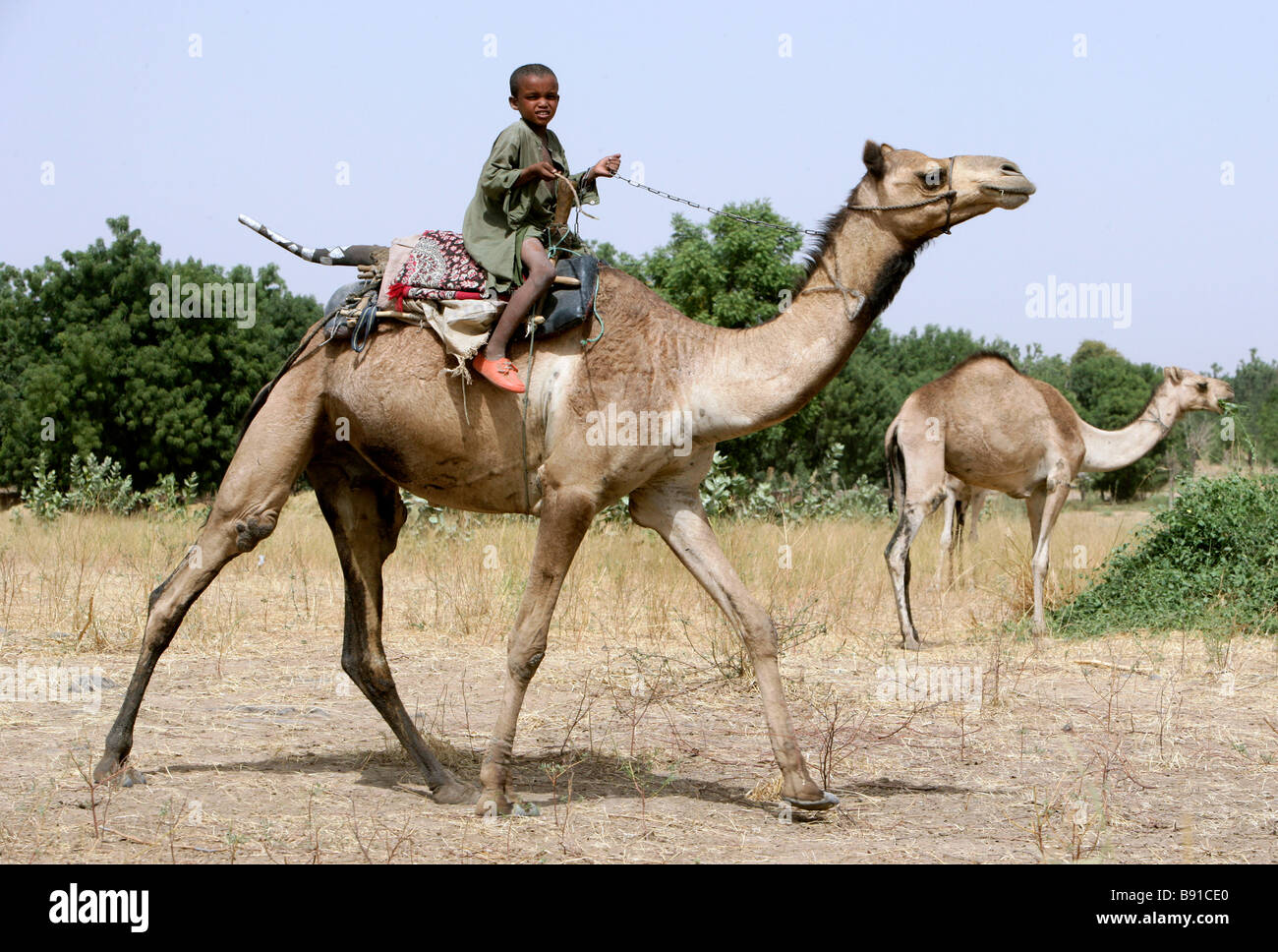 Nigeria: young nomad boy riding on the back of his camel - Stock Image