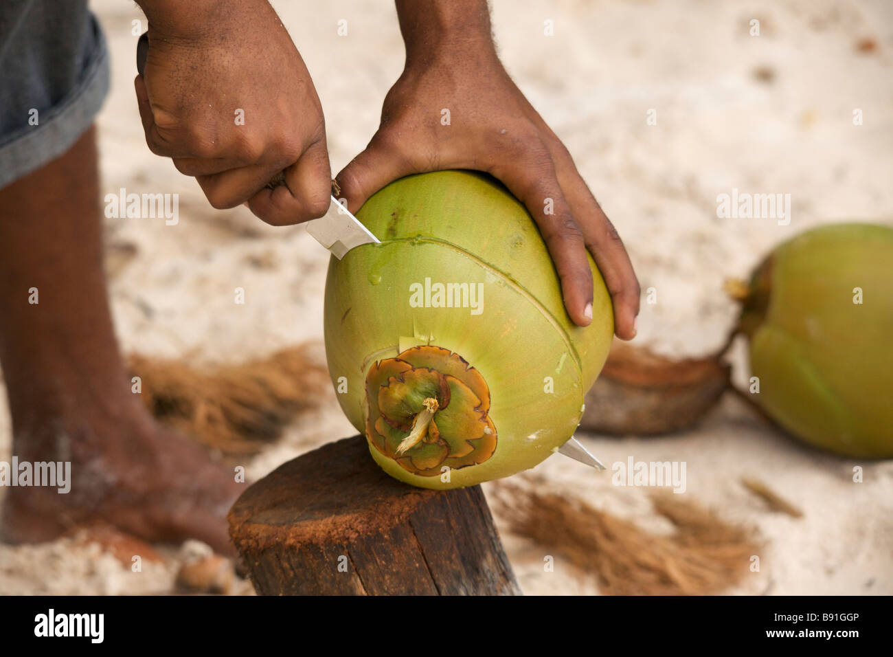 Young Bajan man opening fresh coconut at 'Crane Beach', Barbados, 'West Indies' - Stock Image