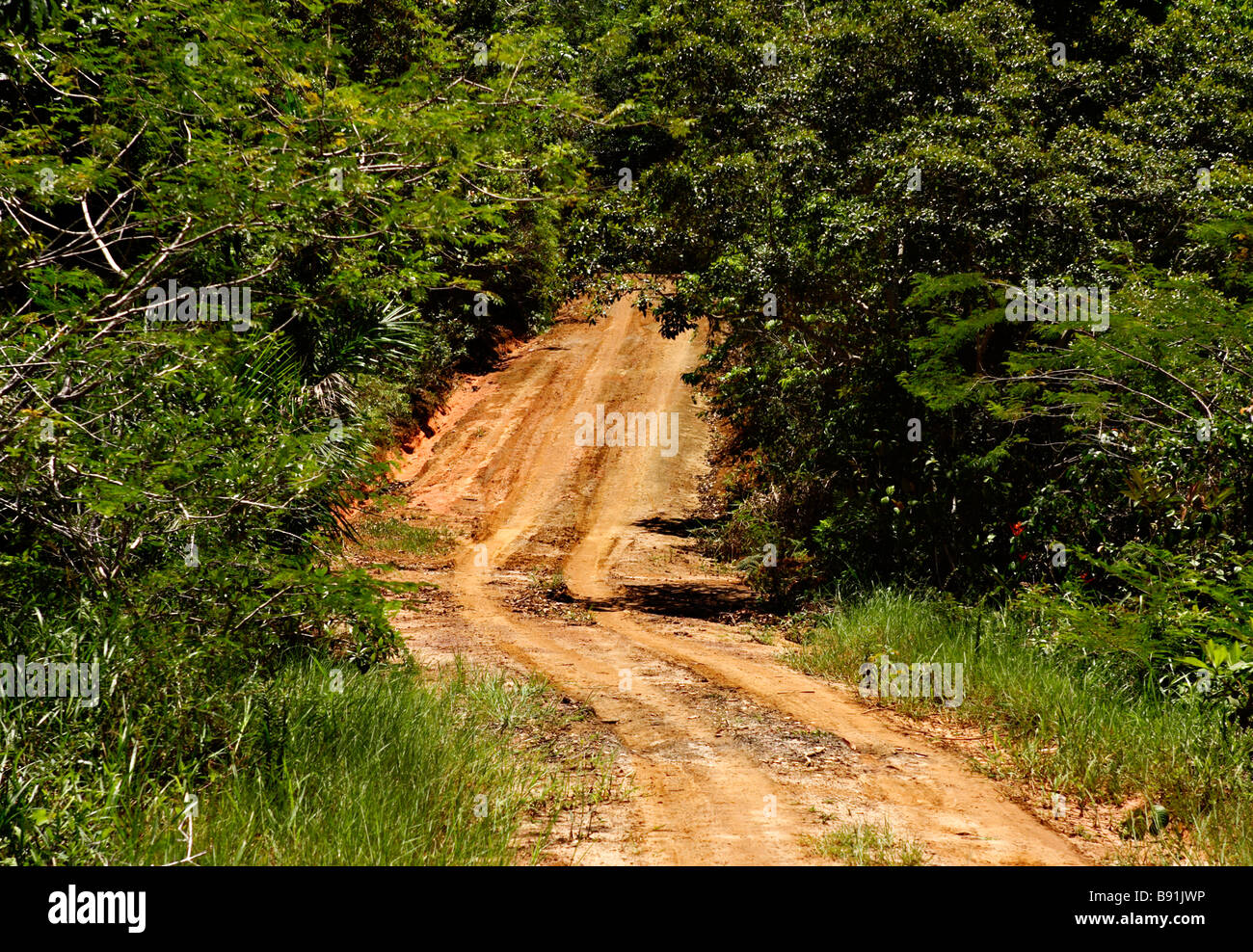 Sand road in Ecoparque de Una Atlantic Rainforest Mata Atlântica Bahia Brazil South America - Stock Image