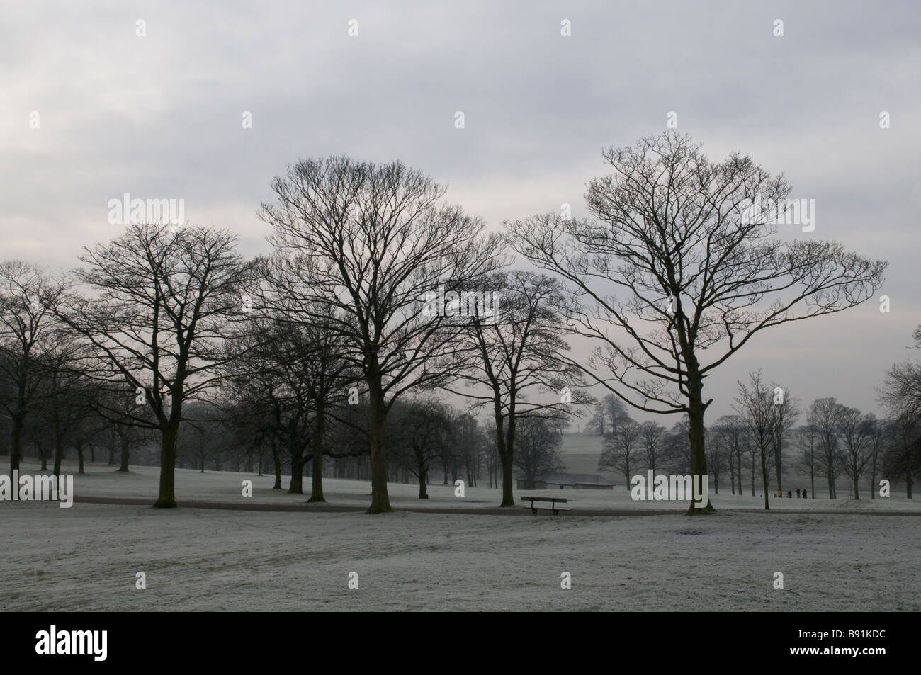 Trees lining the promenade in the winter in Roundhay Park, Leeds, England Stock Photo