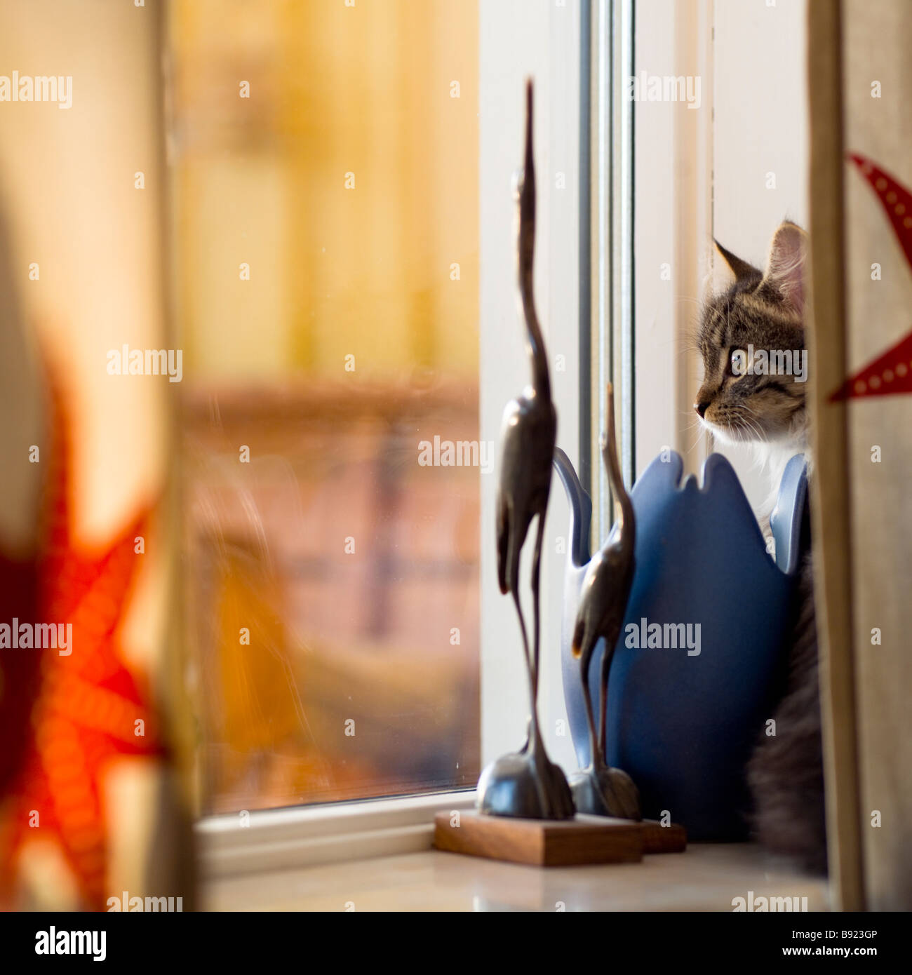 Curious cat looking out of window - Stock Image