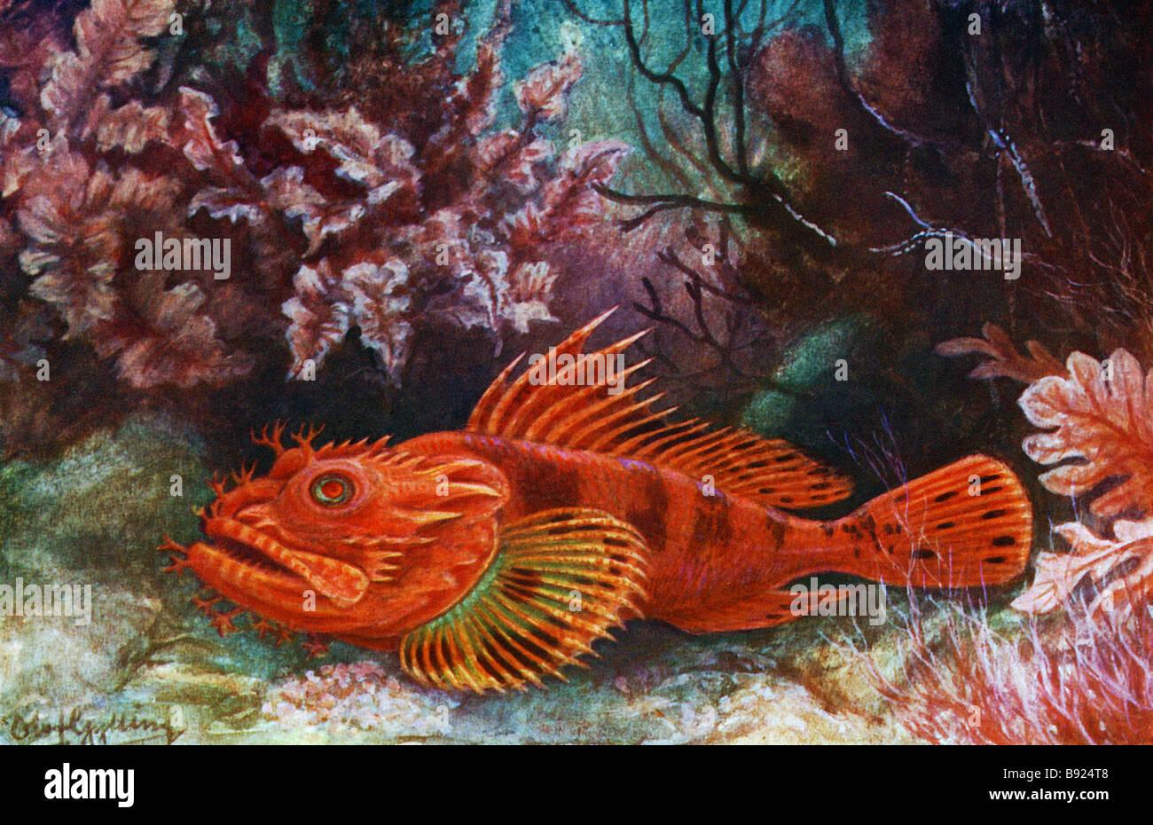 The Red Scorpion Fish, Scorpaena Scrofa, 19th century illustration by Olof Gylling (1850-1928) Stock Photo