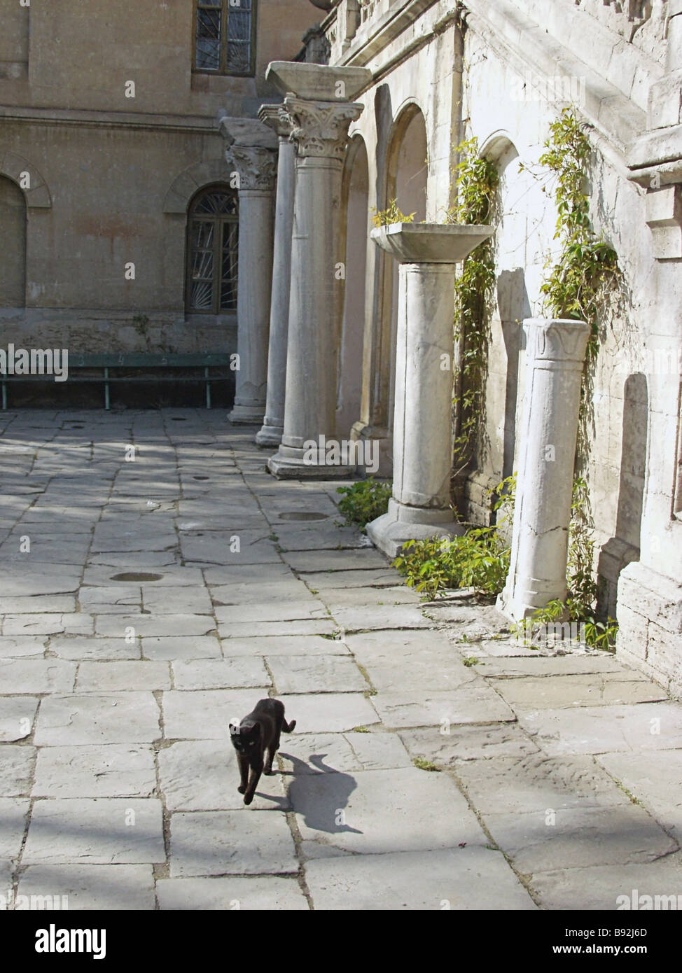Cat strolling amid the ruins of the ancient Greek town of Chersonesos 5th century B C 15th century A D national - Stock Image