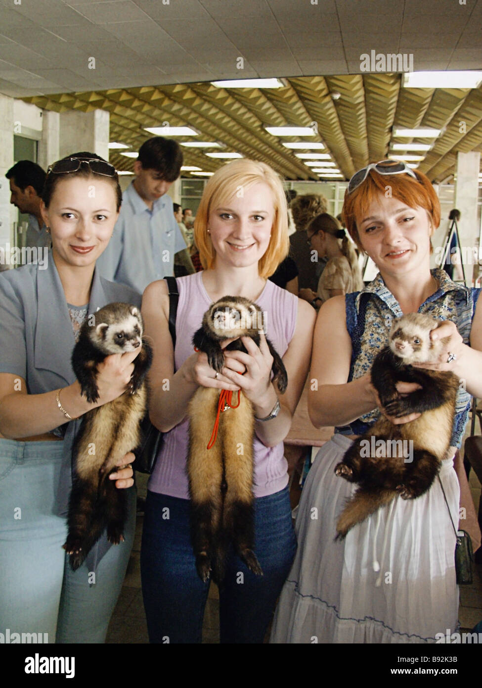 Ferrets participants in the 9th International Wildlife Festival The Kind World of 2003 which involved more than - Stock Image
