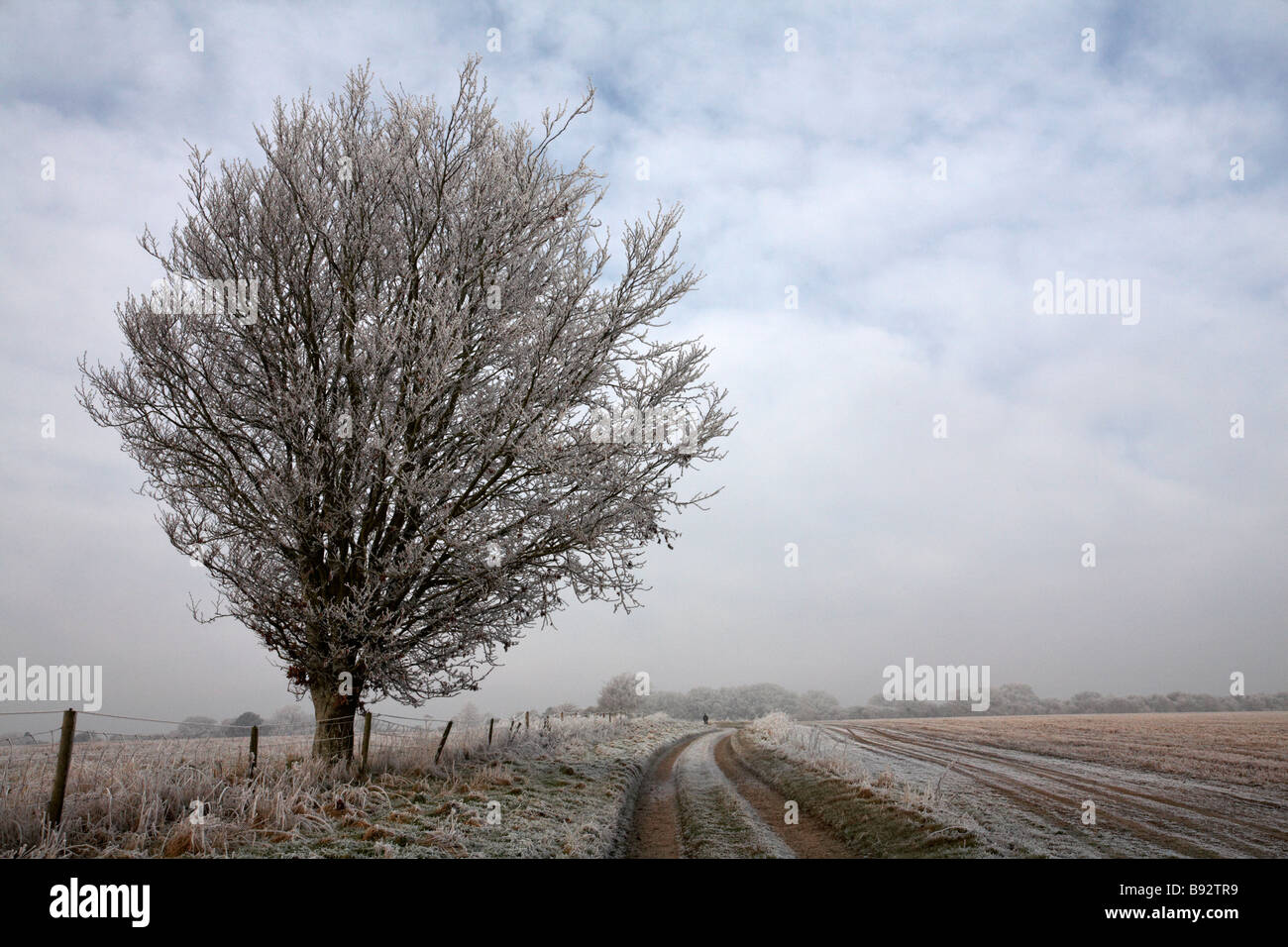 Track though Dorset countryside covered with hoar frost, at Dorset in January - Stock Image