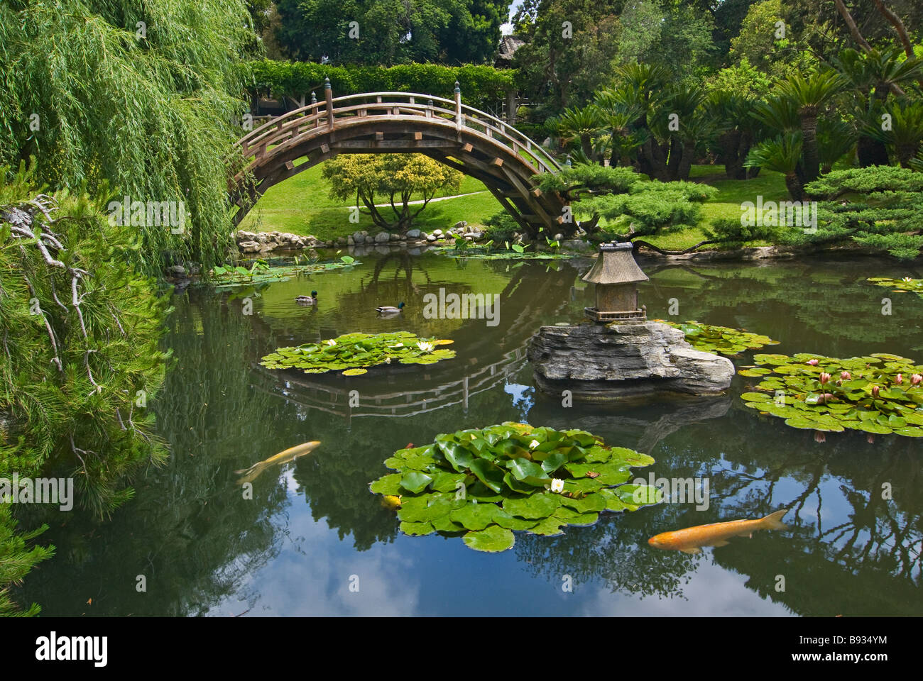 Japanese garden with moon bridge and lotus pond with koi for Koi pond japanese garden