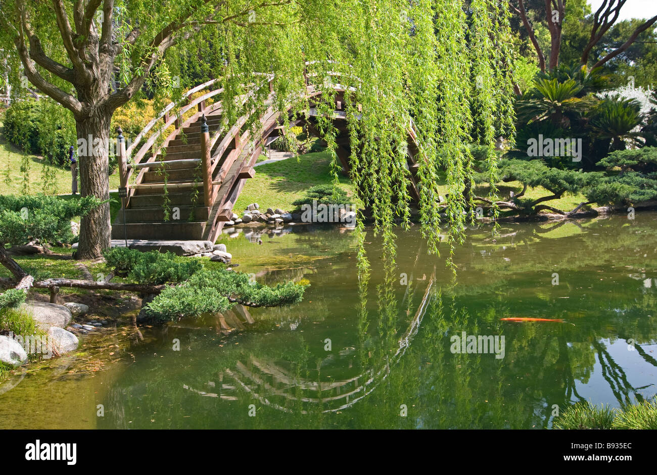 Japanese Garden with Moon Bridge and Lotus Pond and Koi Fish Stock on
