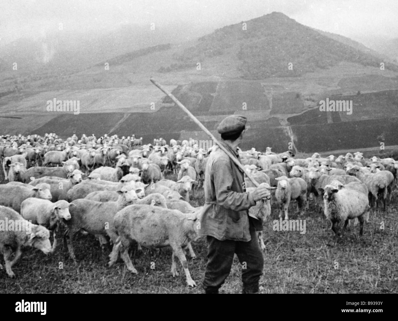The Shepherd Driving A Flock Of Sheep To Pond