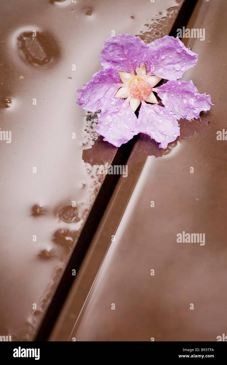Wood lily stock photos wood lily stock images alamy detail of a lily flower with rain drops over a wood deck stock image izmirmasajfo
