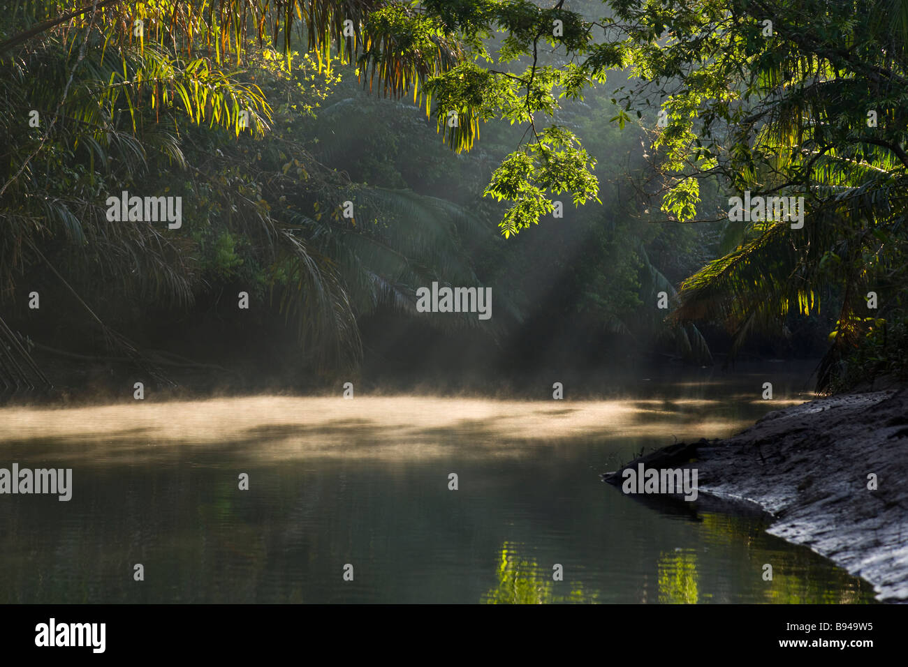 Sunlight shining through morning mist on the Chocuaco river in the rainforest of the Osa Peninsula, Costa Rica. - Stock Image