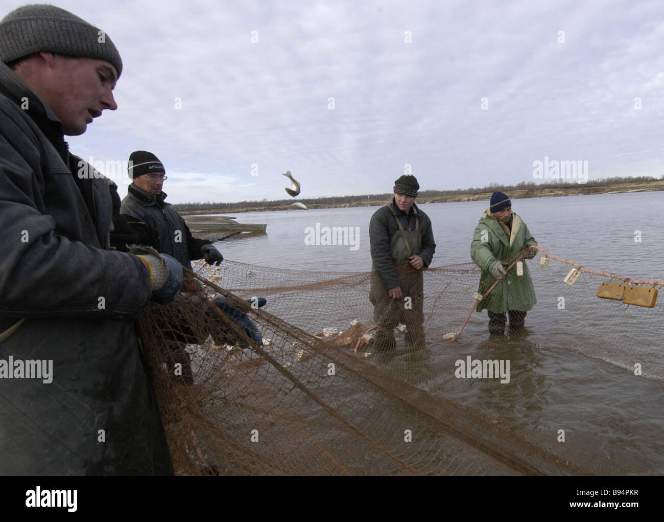 Netting fish on the Irtysh River near the village of Uvat - Stock Image
