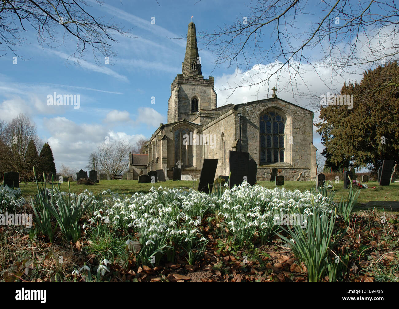 display of snowdrops, St Ediths church, Orton on the Hill, Leicestershire, England, UK - Stock Image