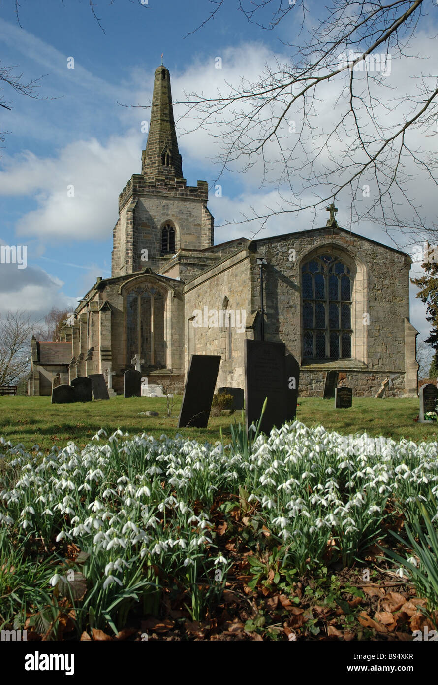 display of snowdrops, Orton on the Hill, Leicestershire, England, UK - Stock Image