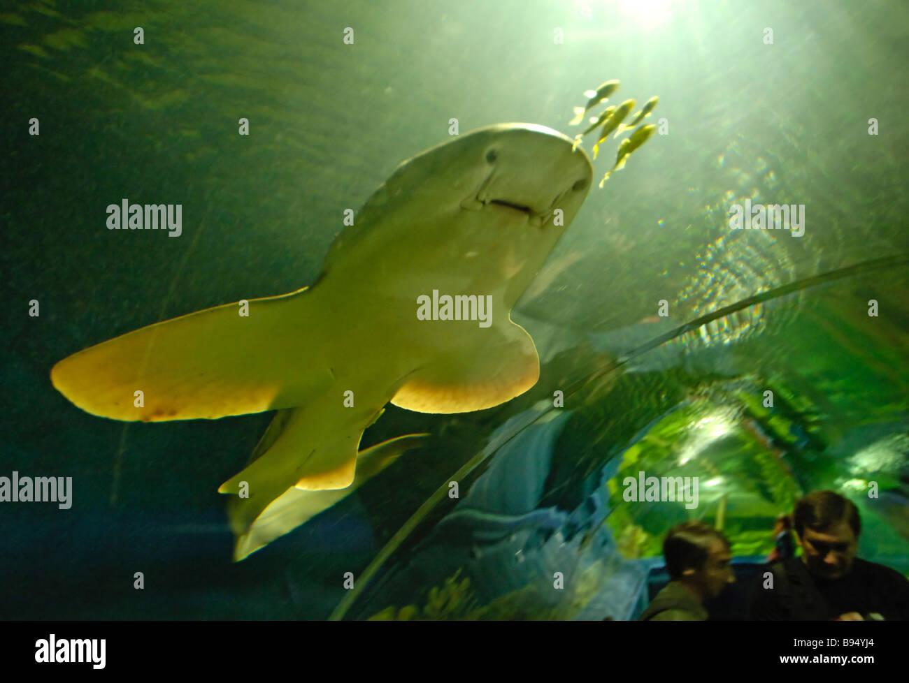 Oceanarium in St. Petersburg: address, photo, reviews 12