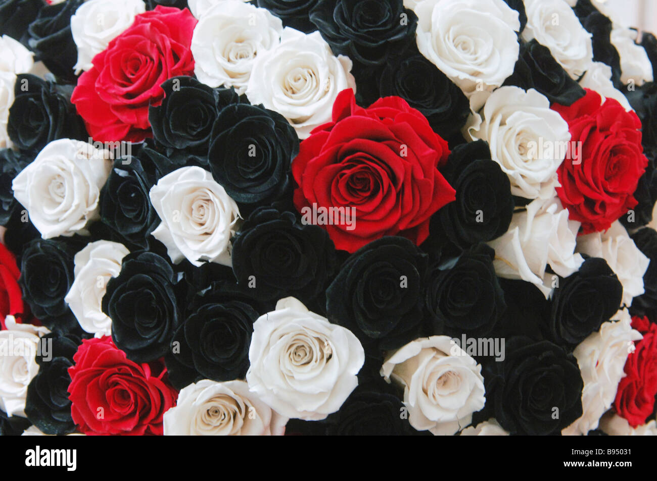 A Bouquet Of Red White And Black Roses Put On Display At The Flowers