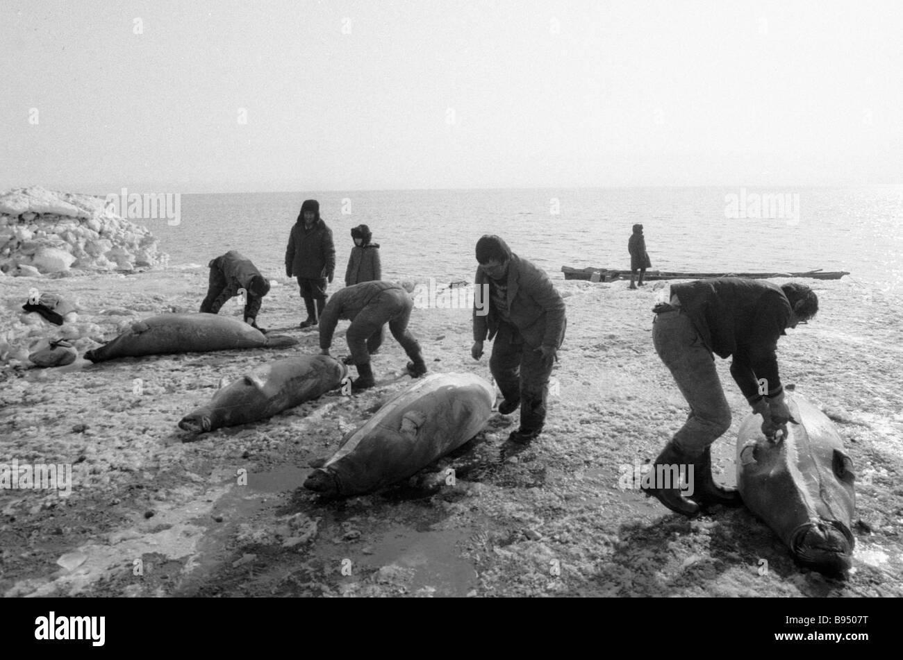Hunters from Eskimo village of Sireniki butcher the take - Stock Image