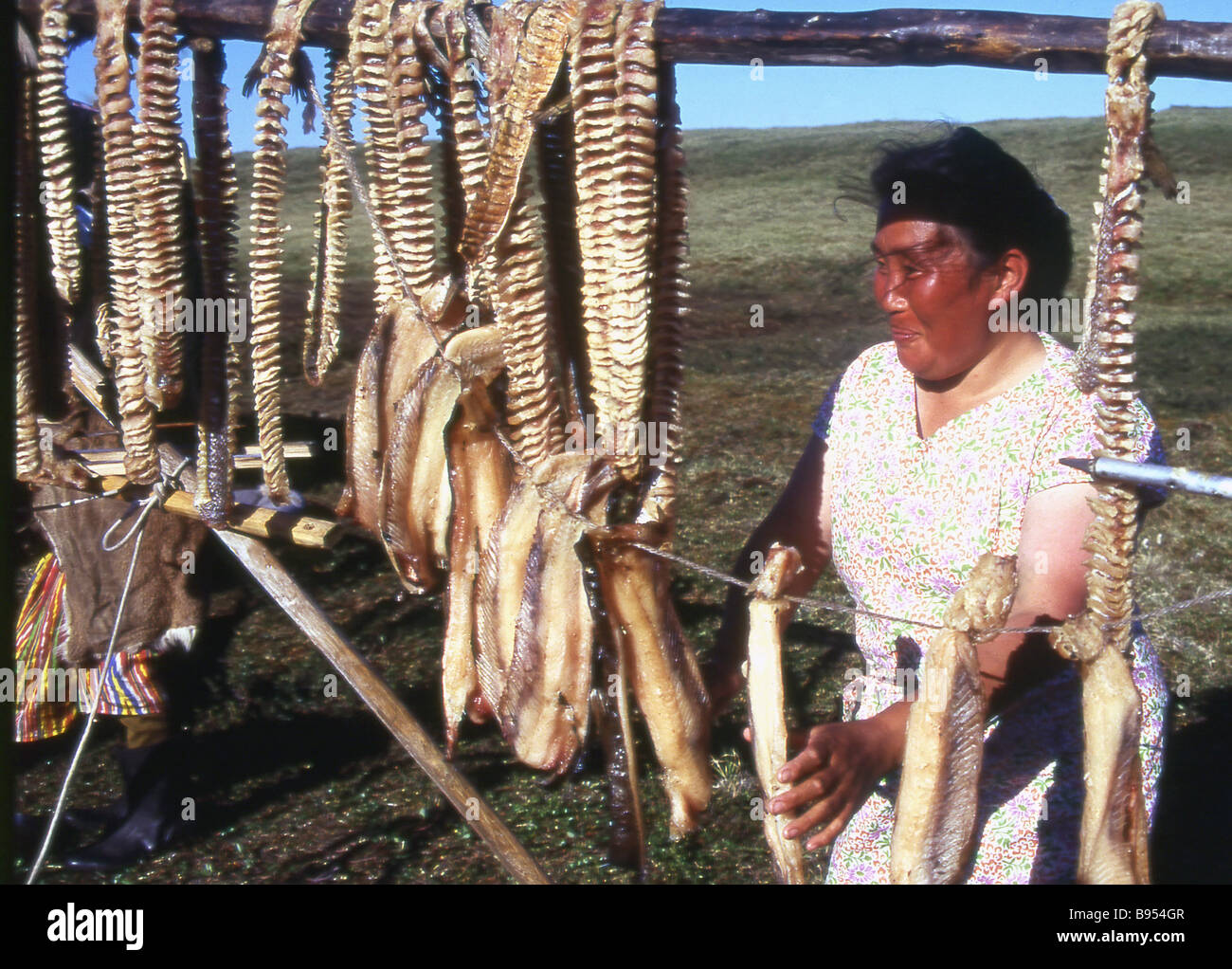Dried fish is the favourite dish of fishermen and hunters in the tundra - Stock Image