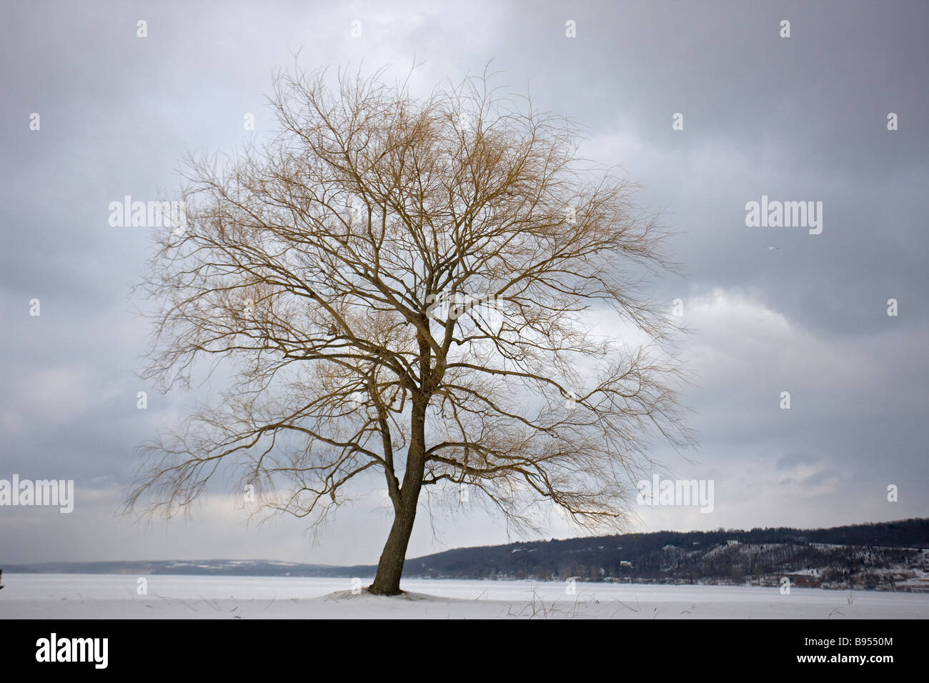 Leafless Tree on Lake - Lake frozen and snow covered - New York - USA - Stock Image