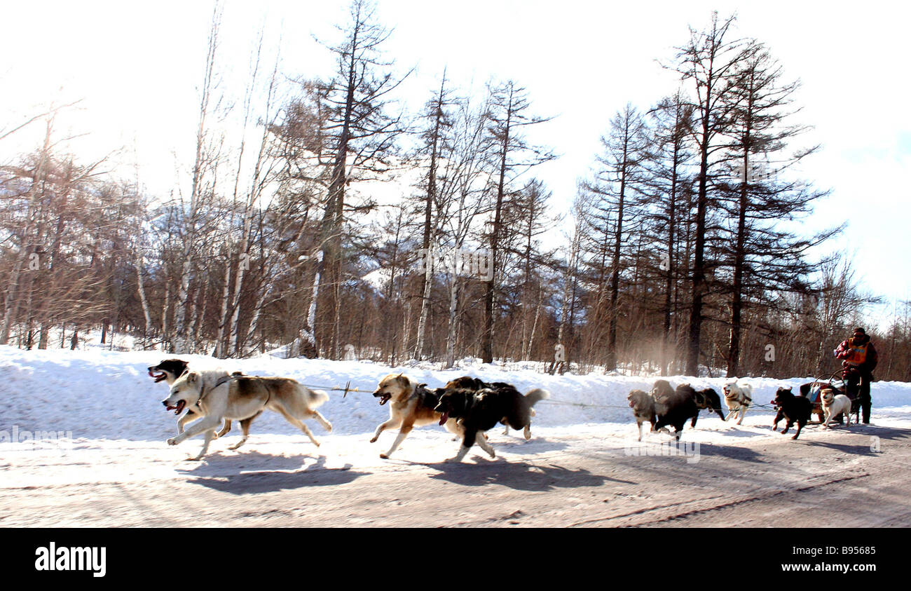 The traditional 950 km Beringia 2007 dog sled race which got underway March 7 from Esso town on the Kamchatka Peninsula Stock Photo