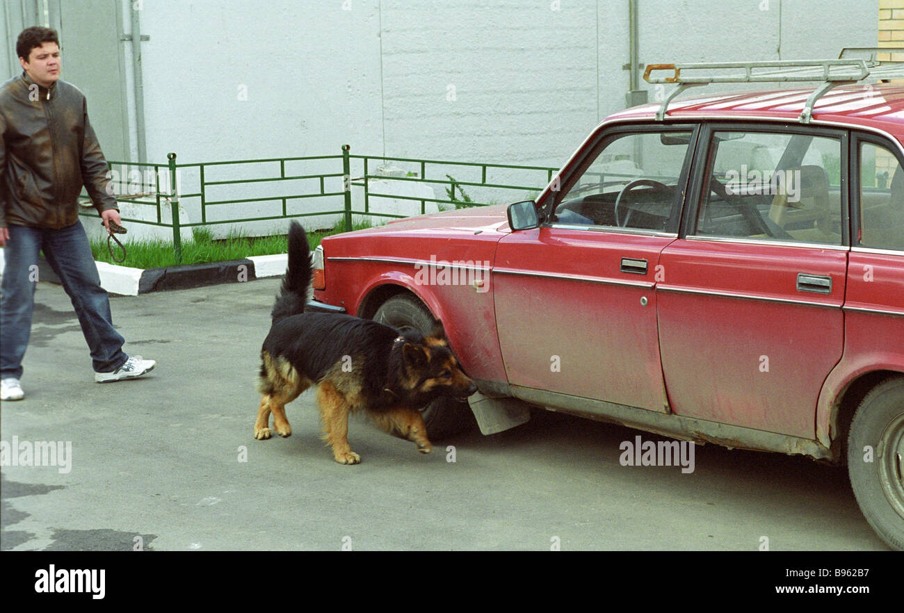 Drill to detect munitions explosives and drugs Dog Training Center - Stock Image