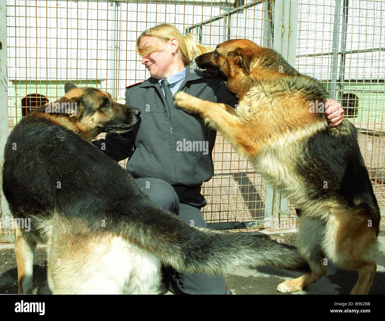 These animals are trained to detect munitions explosives and drugs Dog Training Center - Stock Image