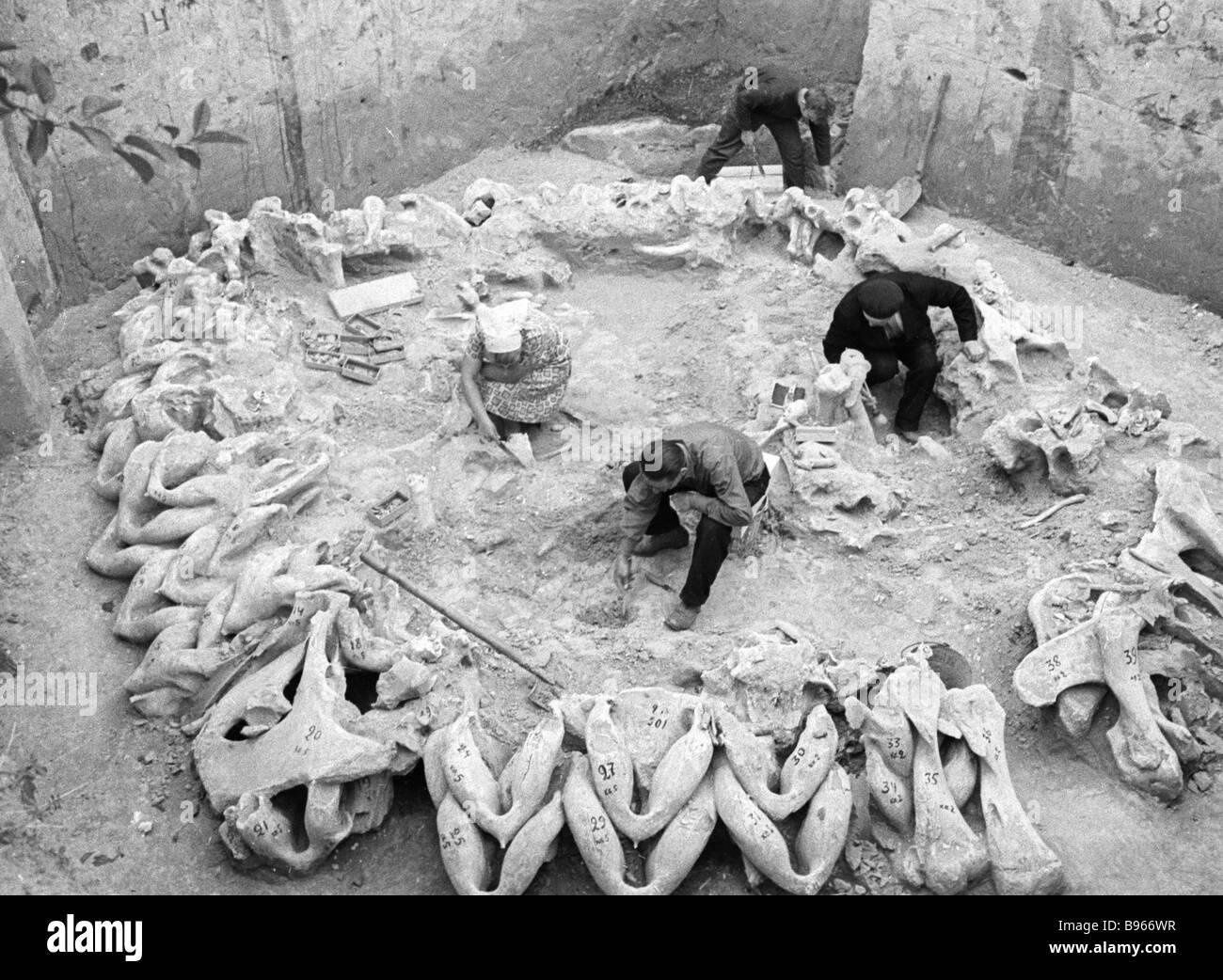 Archeologists excavate a primitive settlement near the Ukrainian village of Mezhyrich - Stock Image