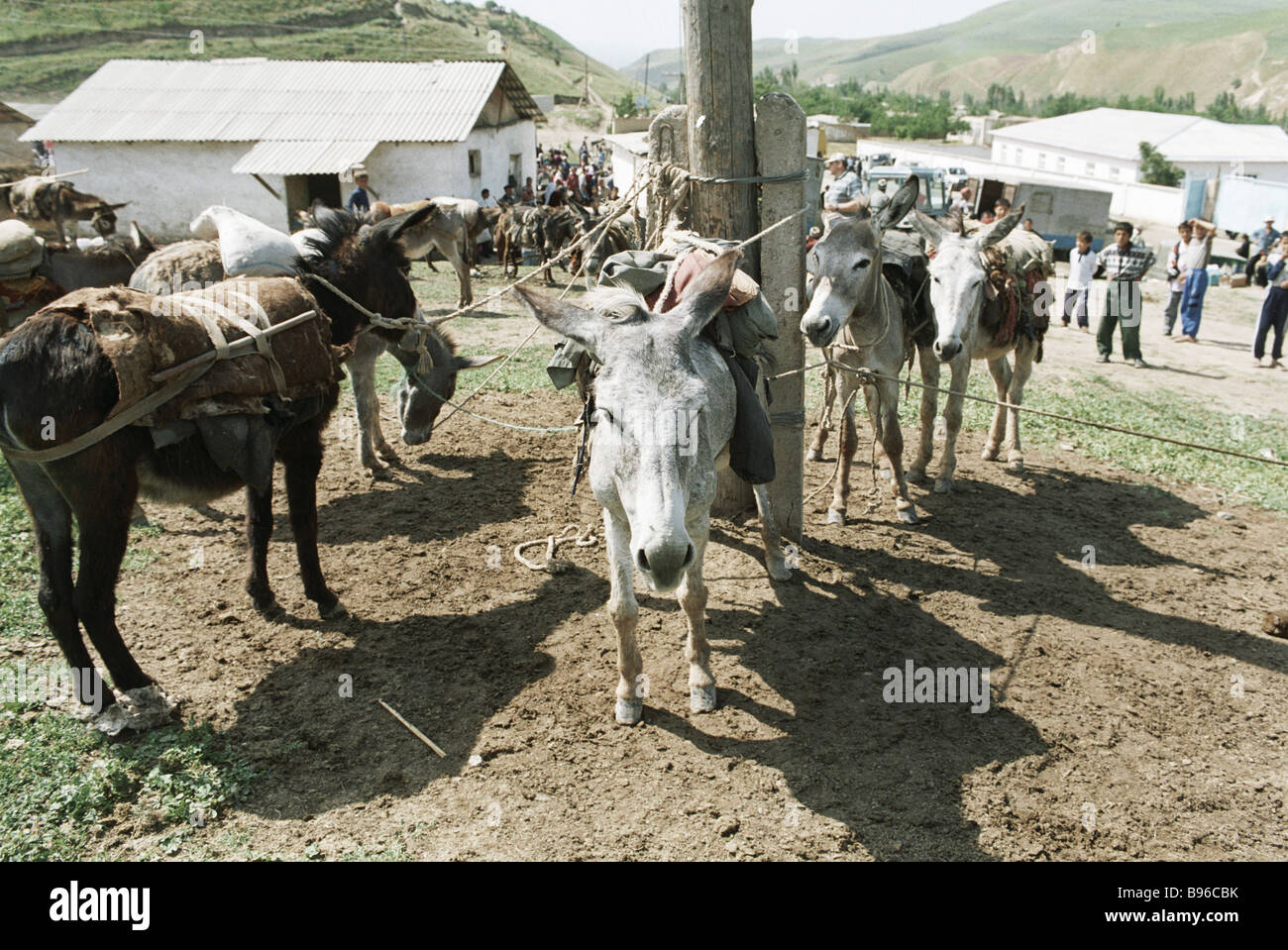 Donkeys tied to a post in the marketplace of a mountain village - Stock Image
