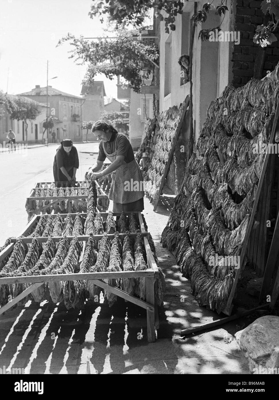 Drying the tobacco leaves Rila - Stock Image