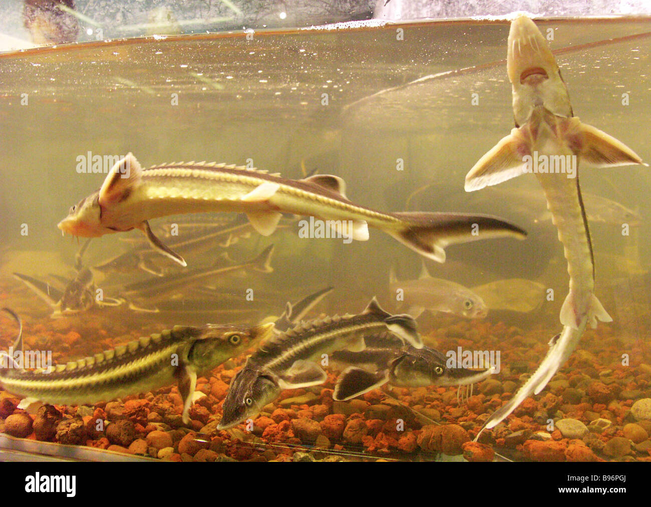 At the 4th international exposition Fish 2004 - Stock Image