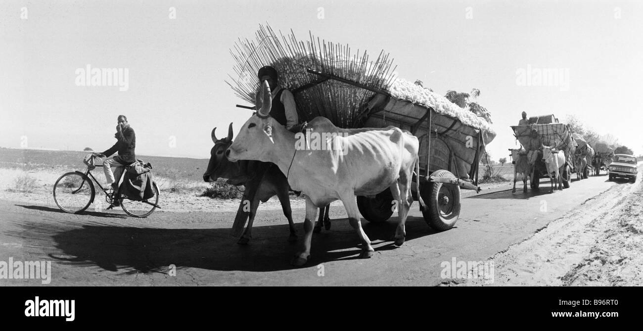 Ox driven carts Pendjab State - Stock Image