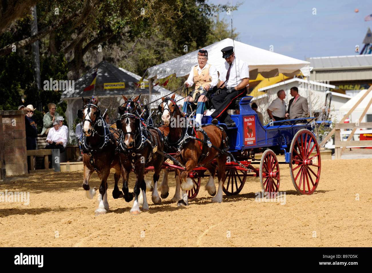 Draft for hitch horses exhibition at Florida State Fair Tampa - Stock Image