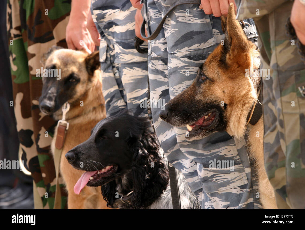 These trained dogs and their handlers serve in the Moscow railroad police riot force - Stock Image