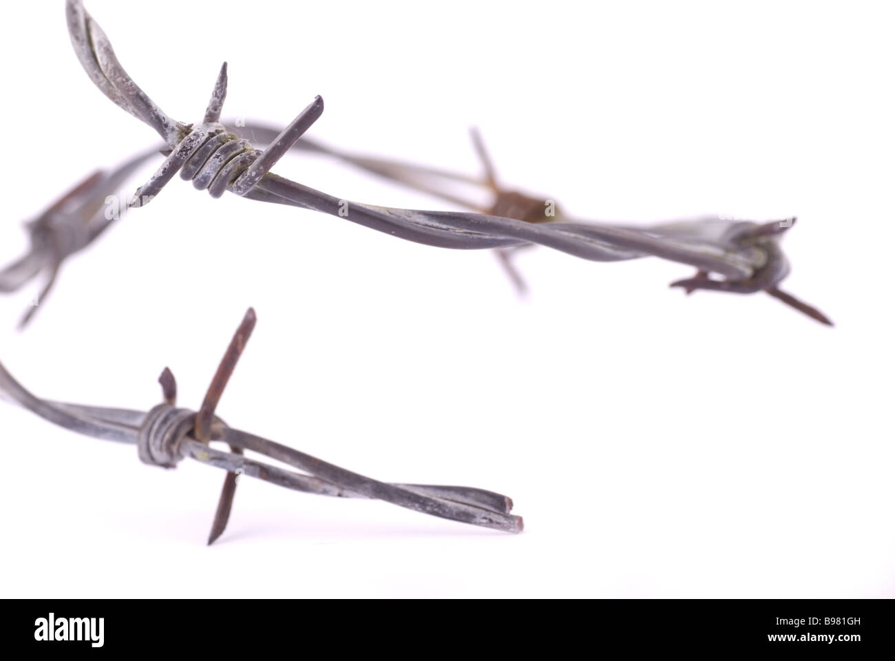 Barb wire cutout on a white background - Stock Image