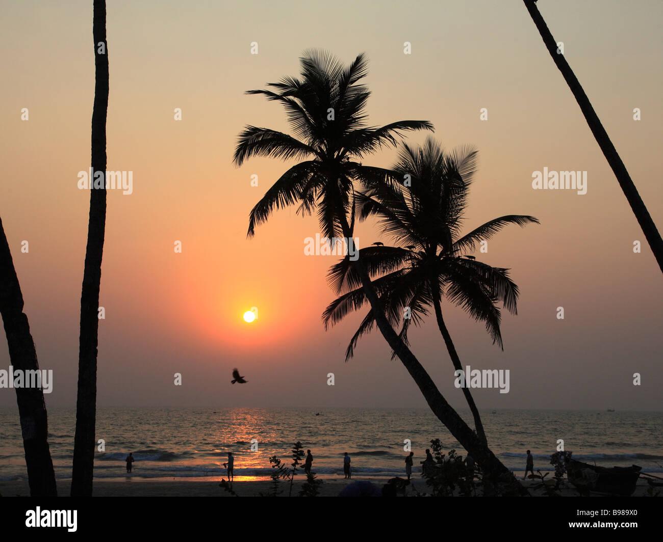 India Goa Colva beach coconut palm grove sunset silhouette - Stock Image