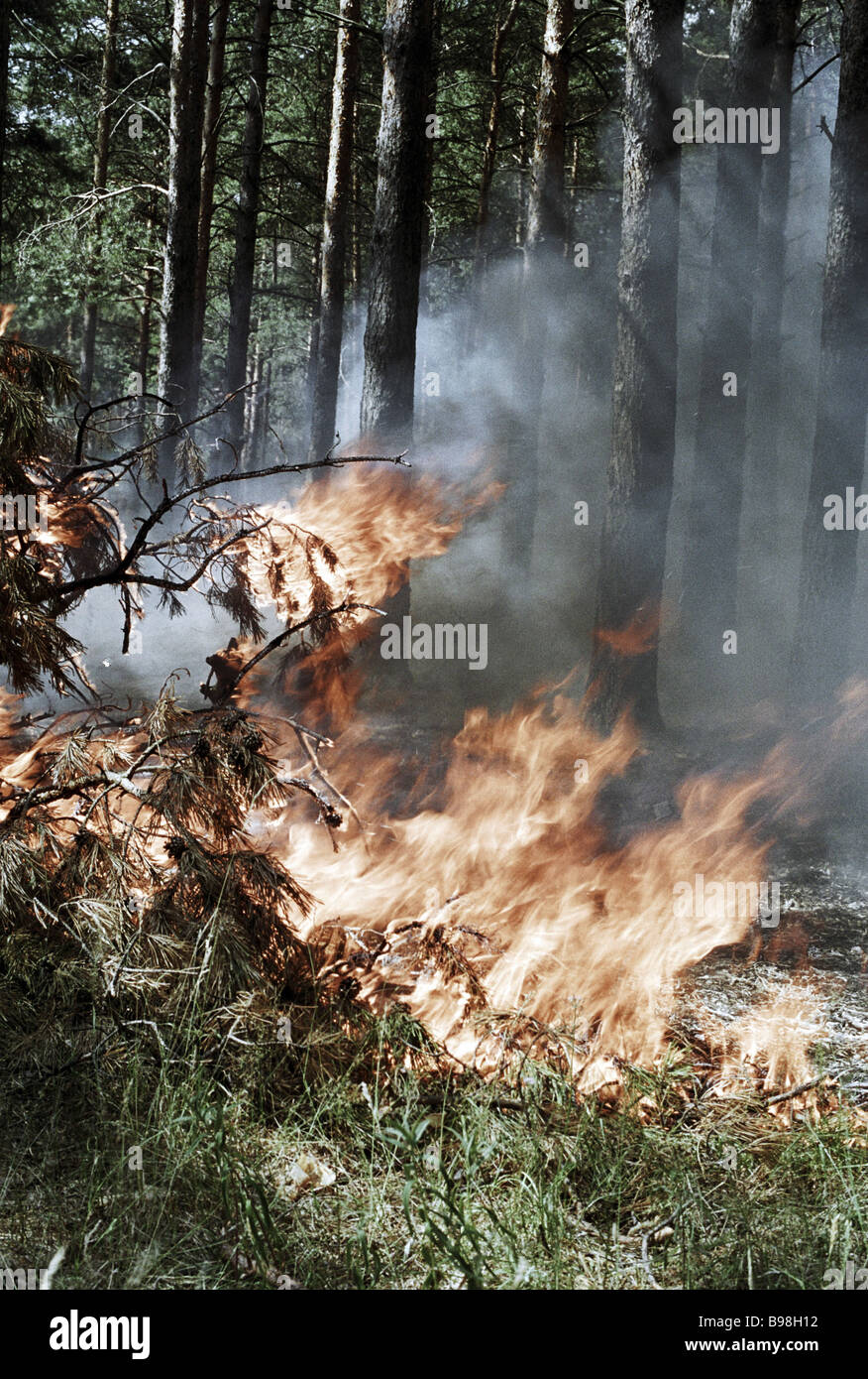 Forest conflagration near Orekhovo Zuyevo Moscow Region on one of Central Russia s sultriest summers - Stock Image