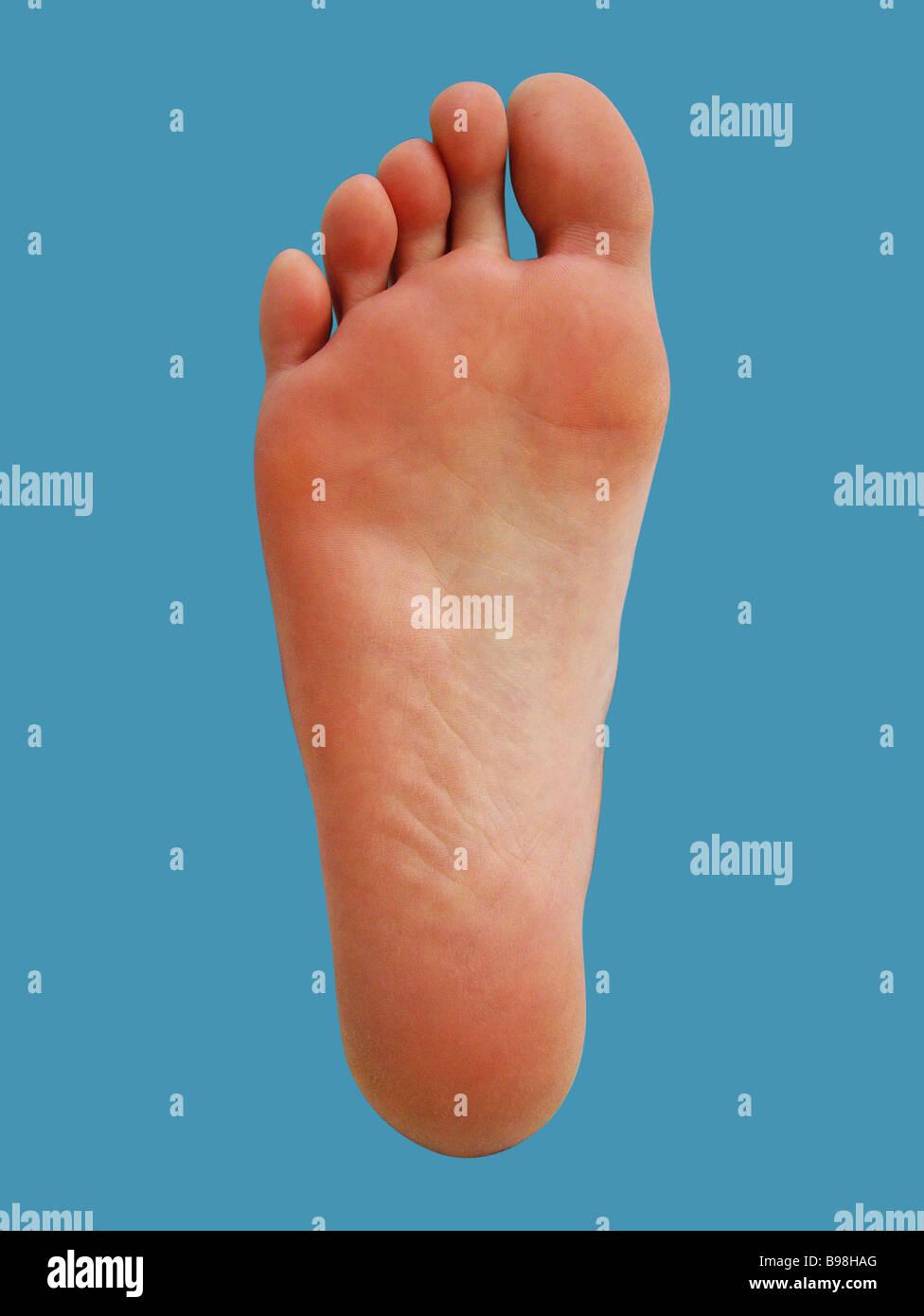 Foot - Stock Image