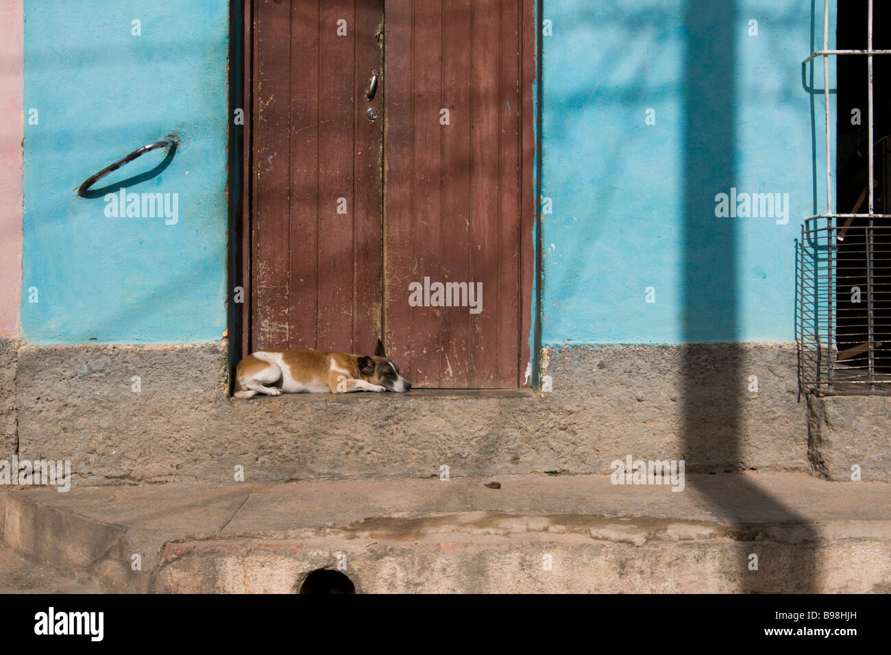 a dog sleeping in the sunshine in Trinidad, Cuba - Stock Image
