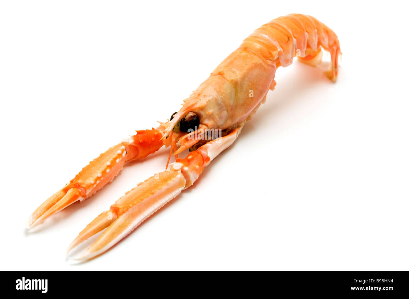 Norway lobster Nephrops norvegicus on a white background - Stock Image