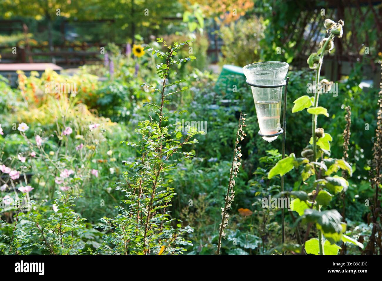 Rain gauge in garden - Stock Image