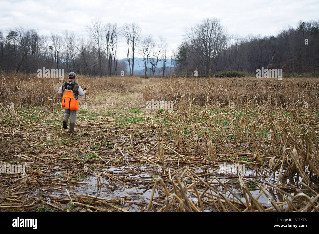 84551d1d21743 HUNTING GUIDE WALKING AN OPEN FIELD CABELLAS ORANGE CARRY VEST BROWNING HAT  LL BEAN PANT -