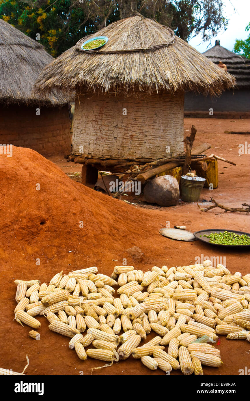 Corn and other staples drying in a village in northern Uganda Stock Photo