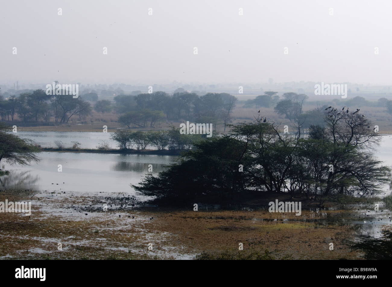 A sight of wetlands in Sultanpur Bird Sanctuary India - Stock Image