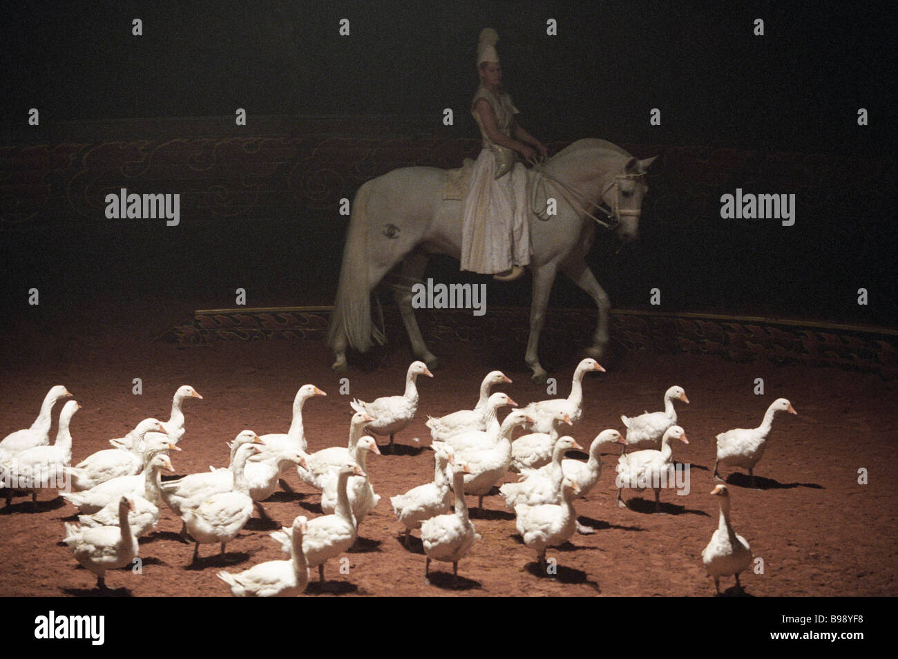 Thirty trained geese are employed Horses of the Wind staged at the French Zingaro equestrian theater Also engaged - Stock Image